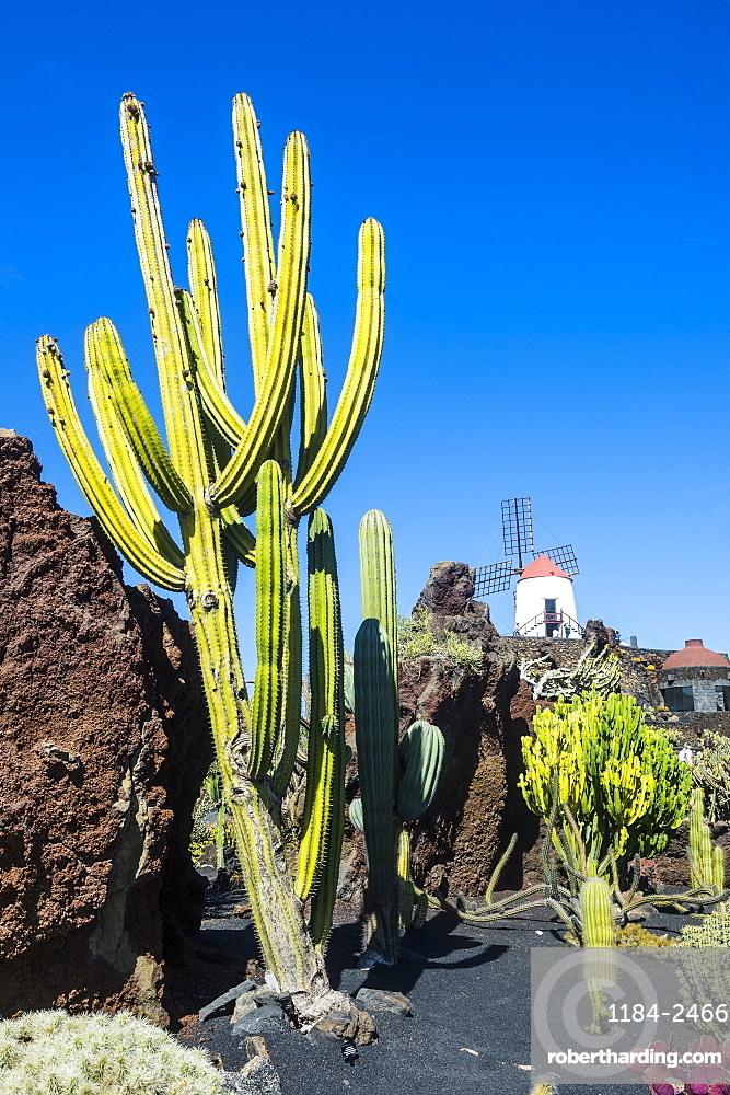 Jardin De Cactus Cactus Garden Stock Photo