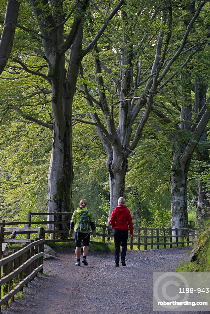 People walking on the forest trails around Mount Floyen in Bergen, Norway, Scandinavia, Europe
