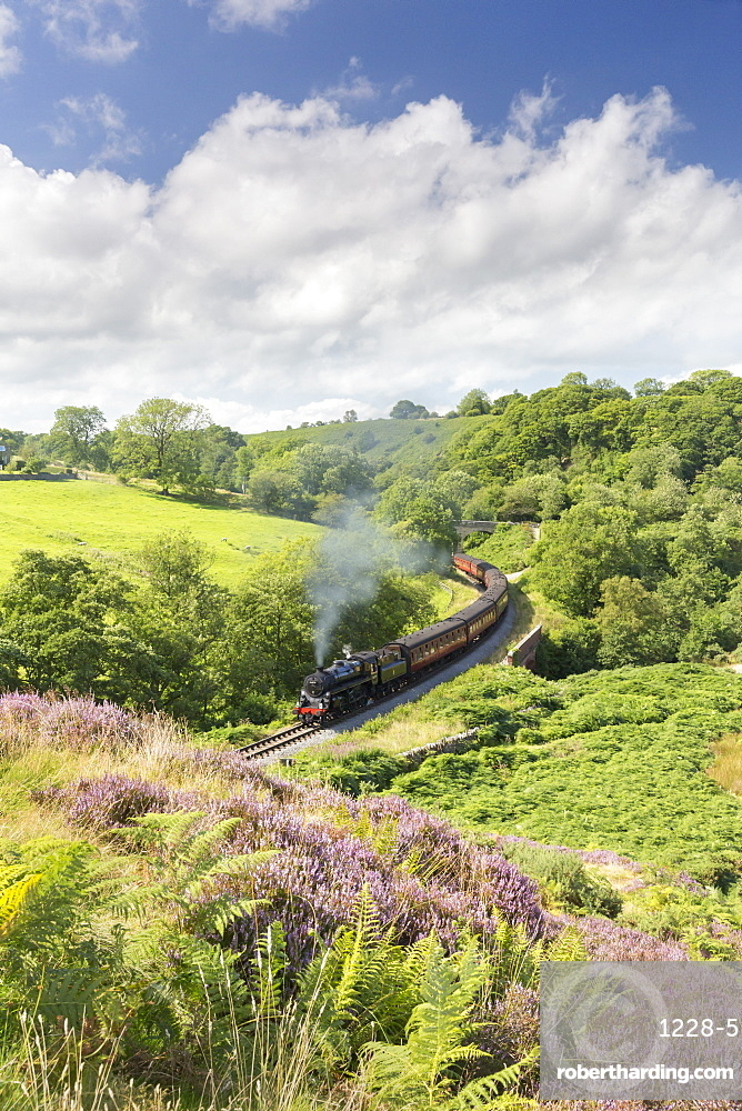 A steam locomotive pulling carriages through Darnholme on the North Yorkshire Steam Heritage Railway, Yorkshire, England, United Kingdom, Europe