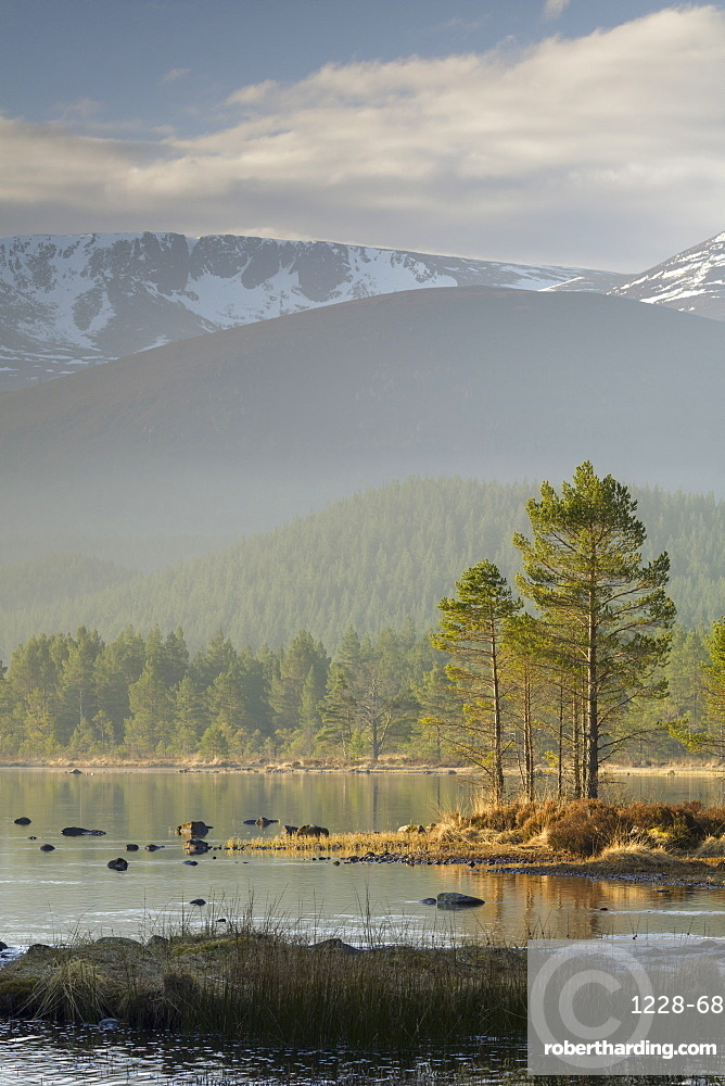 Sunrise over the Cairngorm Mountains and Loch Morlich, Scotland, United Kingdom, Europe