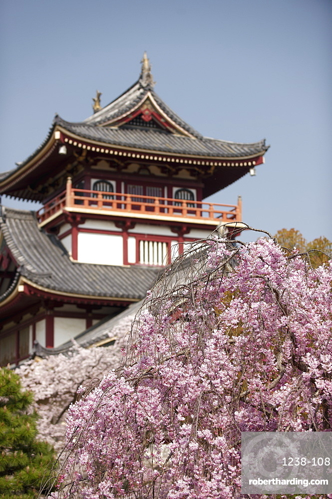 Momoyama castle during cherry blossom season, Kyoto, Japan, Asia