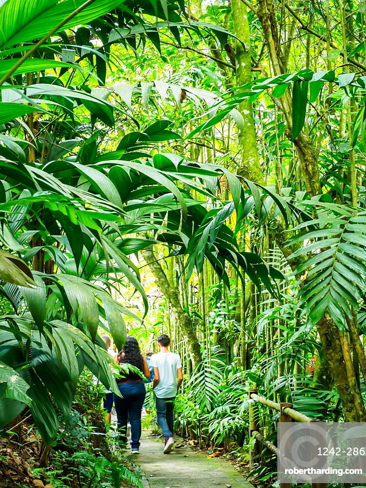 Walking through the Quindio Botanical Garden, Armenia, Colombia, South America