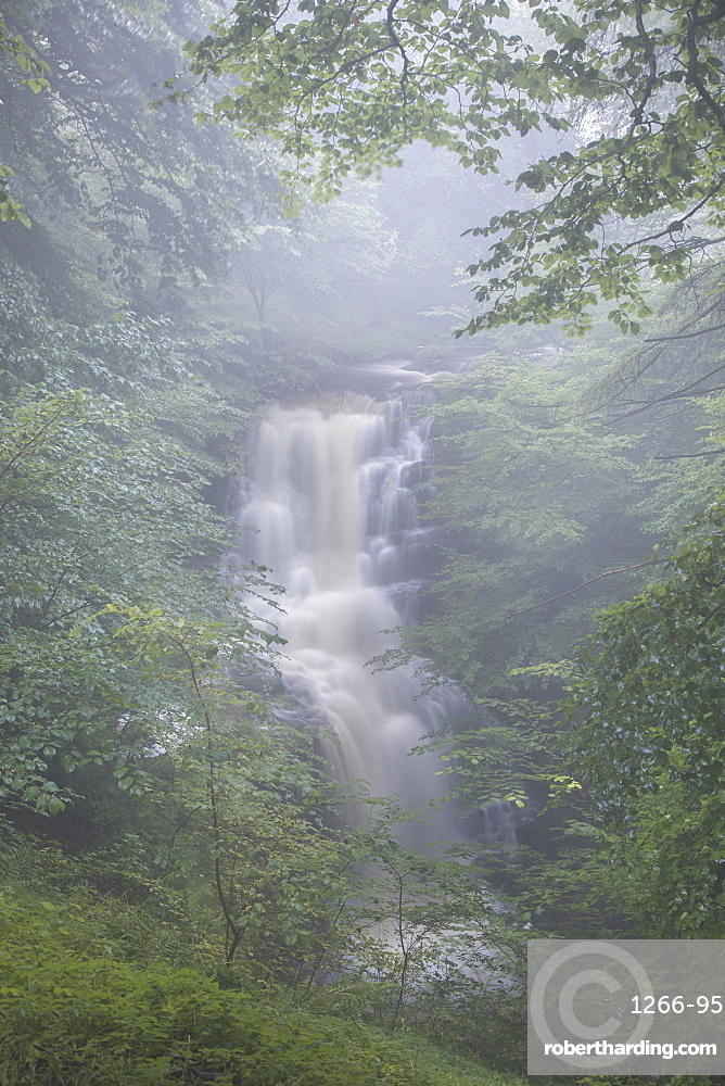 Misty conditions at Scaleber Force waterfall in Scaleber Wood, Settle, Ribblesdale, Yorkshire Dales, North Yorkshire, Yorkshire, England, United Kingdom, Europe