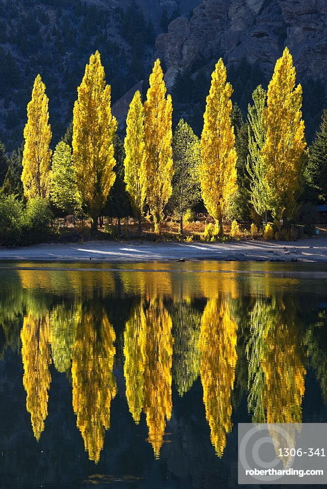 Poplar trees reflected in autumnal colours, San Carlos de Bariloche, Patagonia, Argentina.