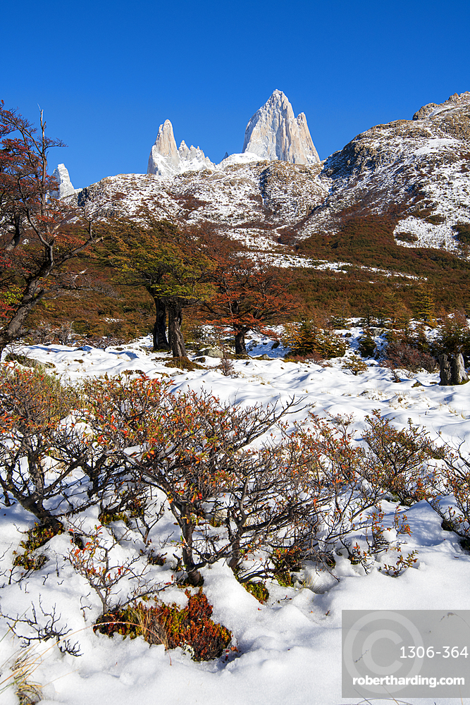 Autumn scene with snow with Mount Fitz Roy and Cerro Torre, El Chalten, Los Glaciares National Park, UNESCO World Heritage Site, Patagonia, Argentina, South America
