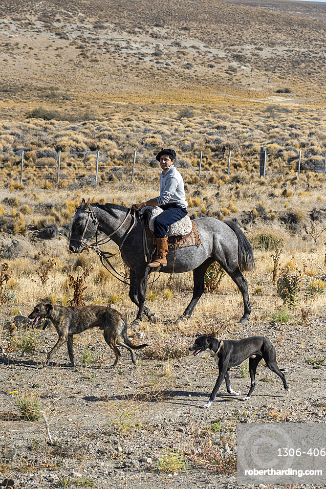 Gaucho riding his horse accompanied by dogs, El Chalten, Patagonia, Argentina