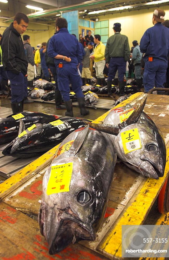 Large tuna fish on trolley   Stock Photo