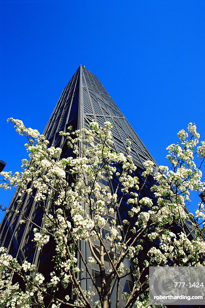 Flowering tree outside Hancock Tower, Michigan Avenue, Chicago, Illinois, United States of America, North America