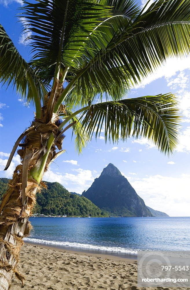 Soufriere Beach lined with coconut palm trees with the town and the volcanic plug mountain of Petit Piton beyond, Soufriere, St Lucia
