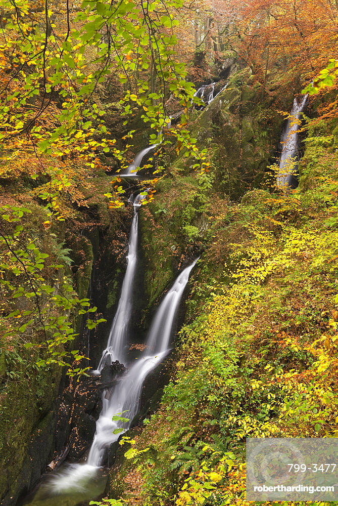 Stock Ghyll Force waterfall cascading through autumnal woodland, Lake District National Park, Cumbria, England, United Kingdom, Europe