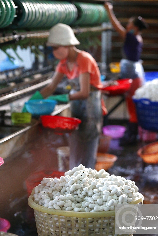 Silkworm cocoons in traditional silk factory, Dalat, Vietnam, Indochina, Southeast Asia, Asia