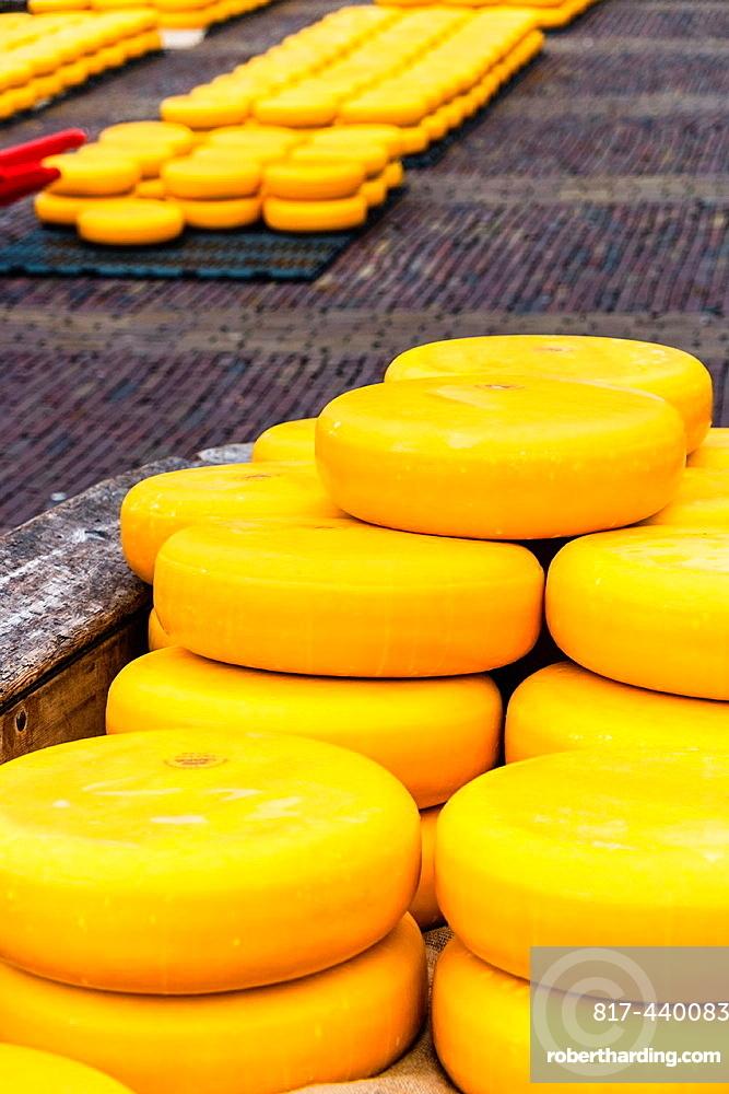 Cheese market, De Waag, Alkmaar, Netherlands, Europe.