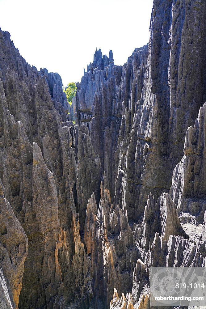 Tsingy de Bemaraha National Park, Melaky Region, Western Madagascar