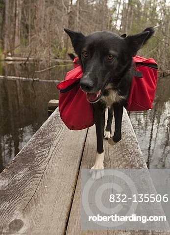 9dd64b771f Pack dog