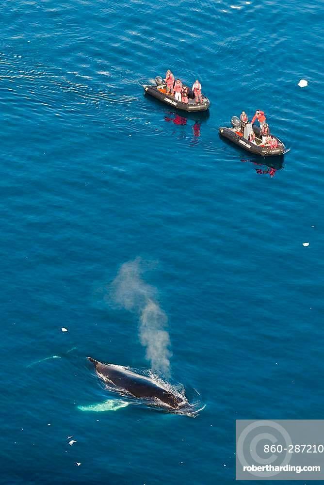 Whale watching on a humpback whale (Megaptera novaeangliae), Antarctica