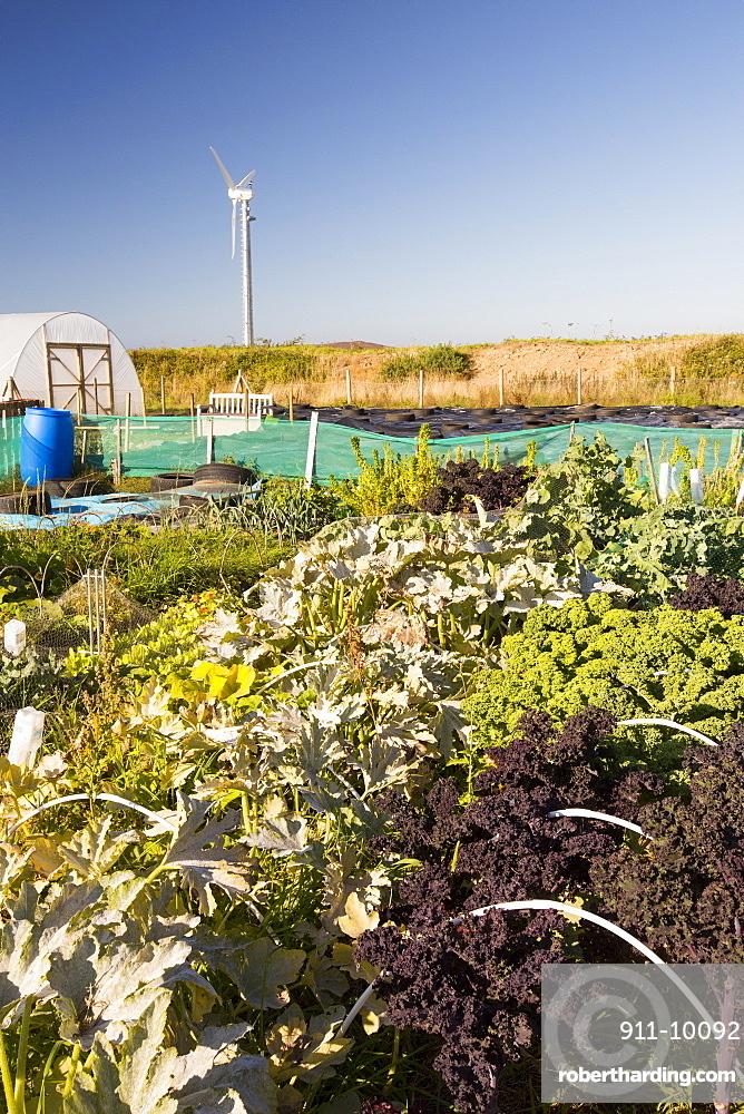 The organic community garden at Mount Pleasant Ecological Park, Porthtowan, Cornwall, UK.