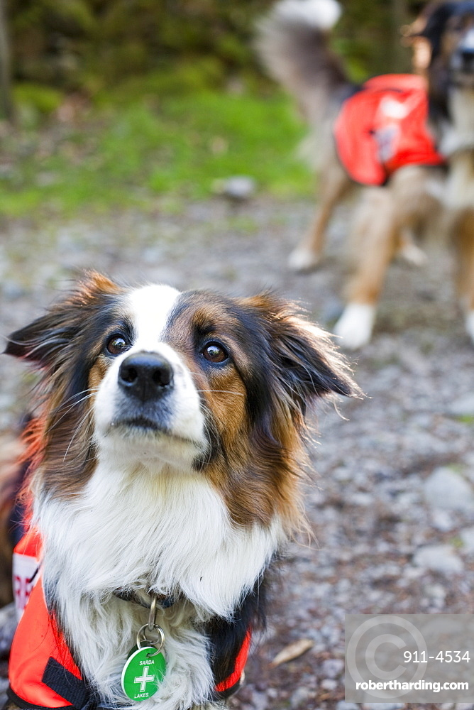 Accredited Search dogs used by handlers of the Search and Rescue Dog Association, United Kingdom, Europe