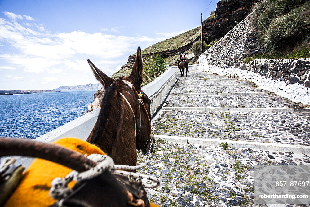 Donkey walking up steps on a hillside in Santorini, Greece.