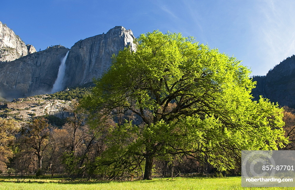 A view of Yosemite Falls from the valley floor in Yosemite National Park, California.
