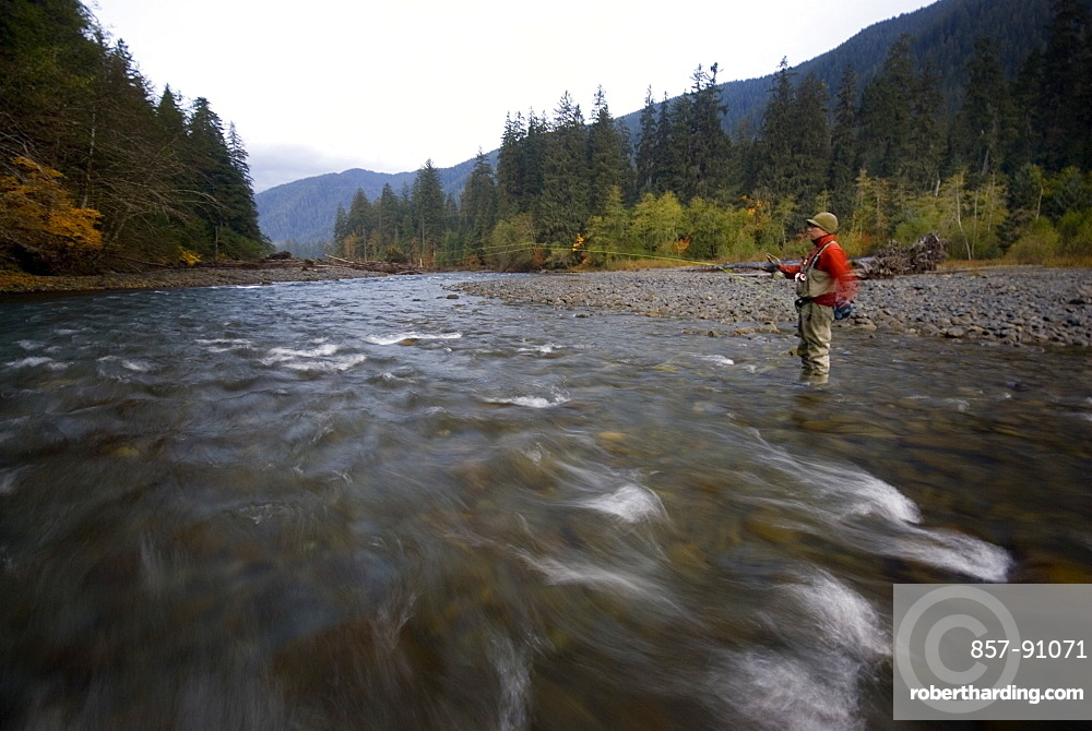 Oct 29, 2008 Hoh National Forest, Forks, Washington Early morning flyfishing for steelhead on the Hoh River with Emerald Water Anglers guide Shannon Carroll among the old growth that still exists within the Park. The Hoh river is a pristine glacial Olympic river and is one of the best salmon fisheries on the west coast of the United States, with runs of Steelhead, coho, chinook, and pink salmon. Note: Emerald Water Anglers, as a conservation policy, only fish steelhead in the Olympic rivers, United States of America