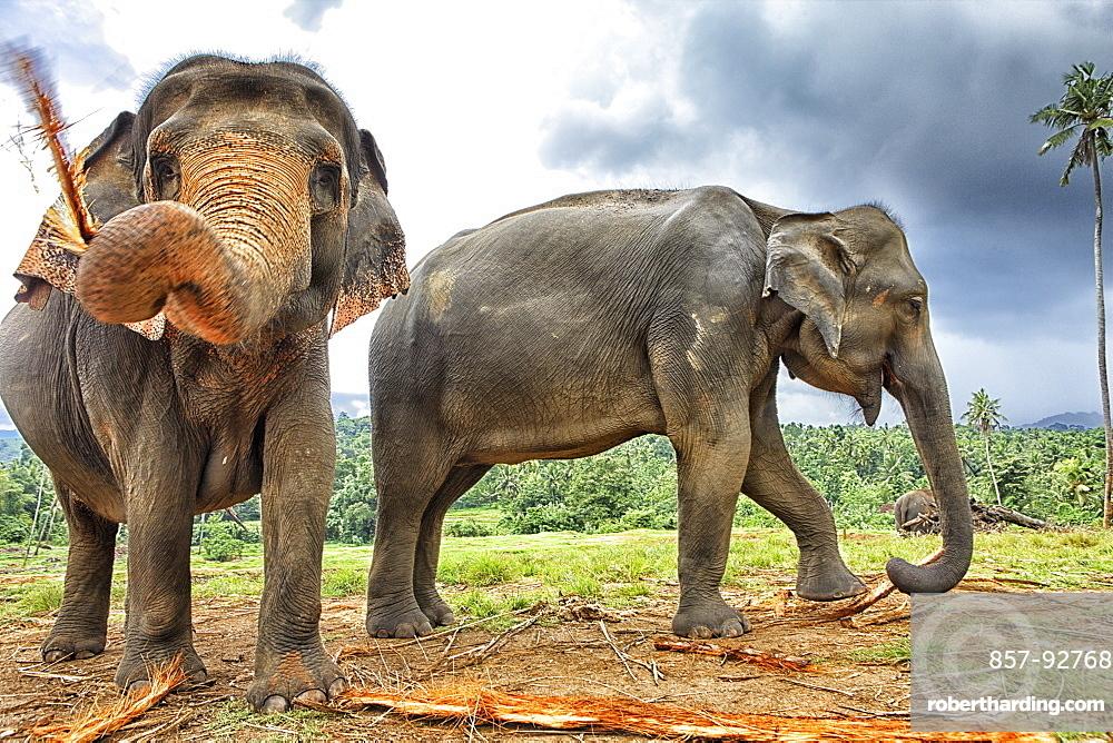 Elephant family at Elephant Orphanage in Pinnawela, Sri Lanka