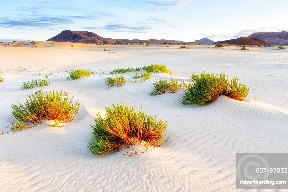 Spain, Canary Islands, Fuerteventura, Dunes of corralejo