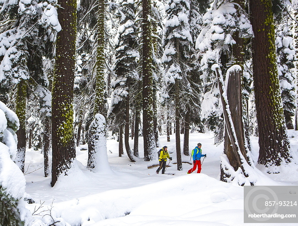 Two People Hiking In Snowy Forest In Lake Tahoe, California, USA