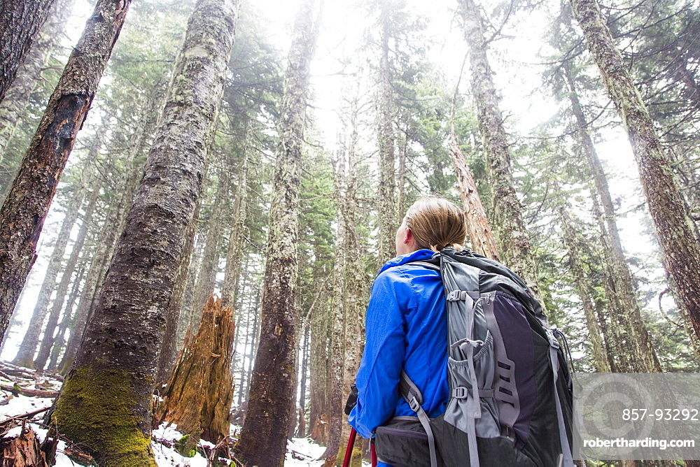 Female Hiker Looking Up At Tall Tree In The Snow Covered Forest Near Seattle