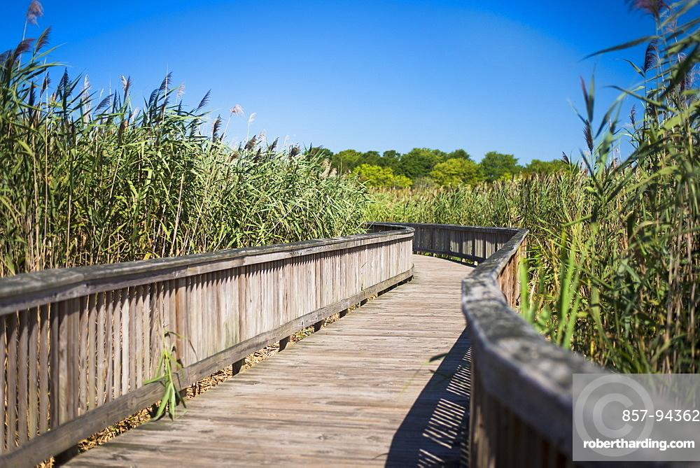 Boardwalk through tall marsh on a summer day in Rhode Island