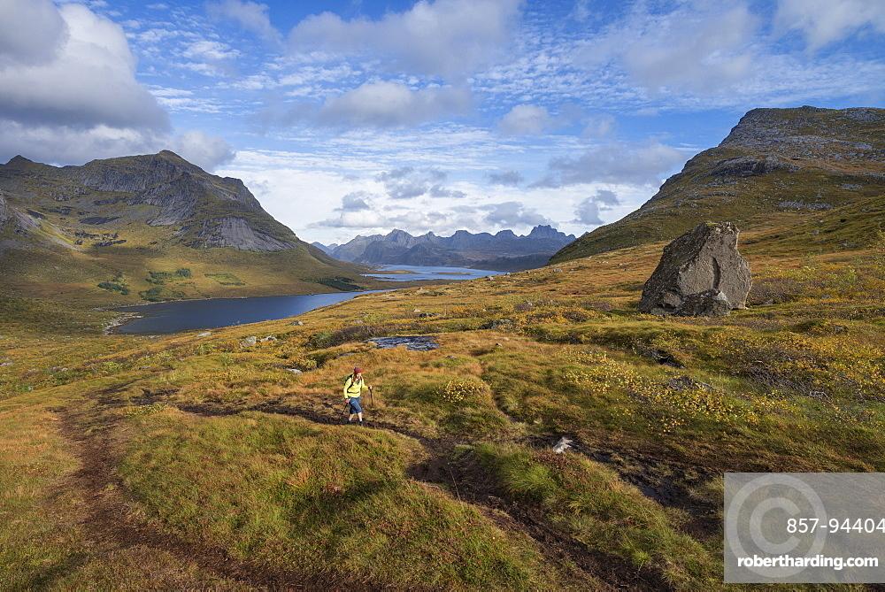 Female hiker hiking trail above Selfjord, Lofoten Islands, Norway