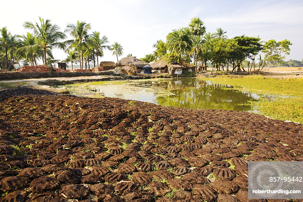 Cow dung belonging to subsistence farmers in the Sundarbans, a low lying area of the Ganges Delta in Eastern India, that is very vulnerable to sea level rise. The cow dung is used as biofuel in traditional clay ovens