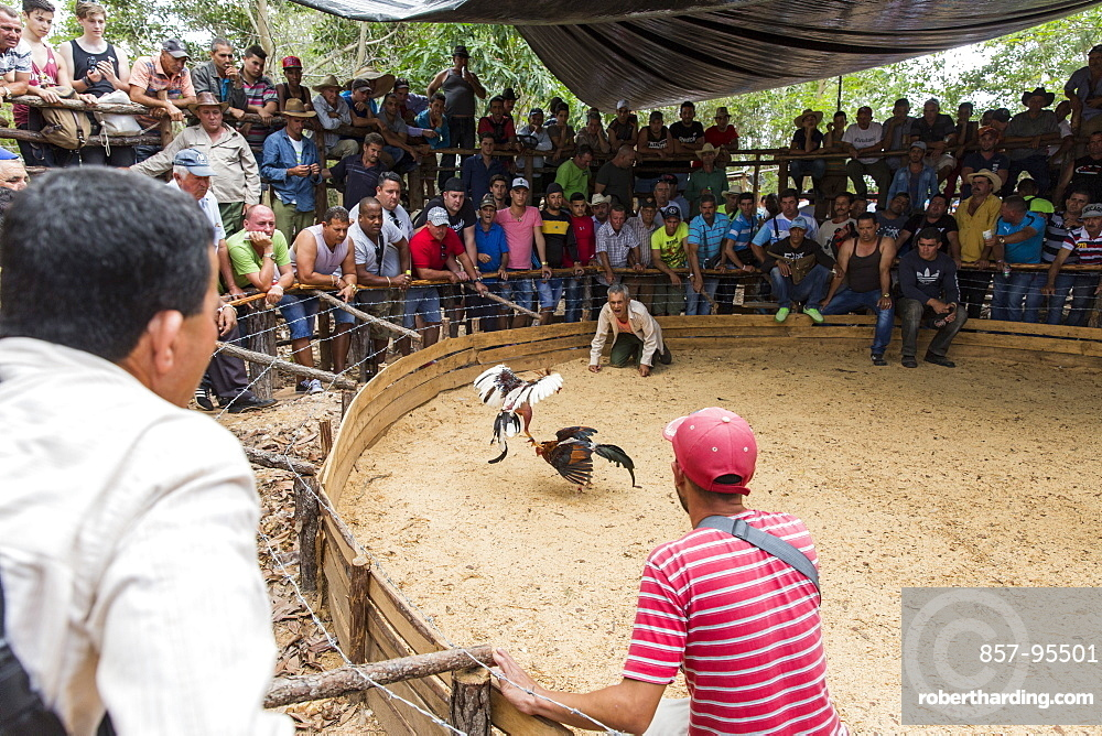 Large crowd of people watching cockfight, Vinales, Pinar del Rio Province, Cuba