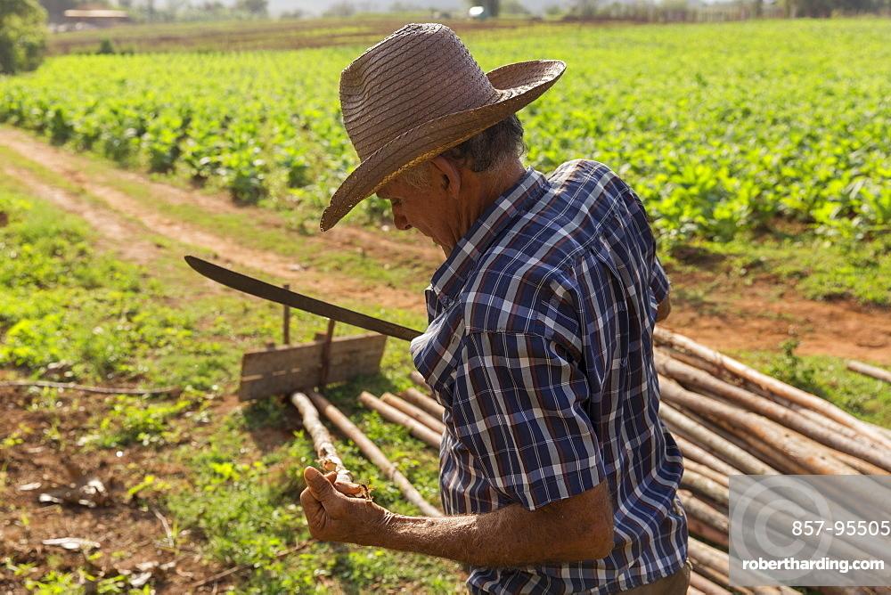 Side view waist up shot of farmer working at farm, Vinales, Pinar del Rio Province, Cuba