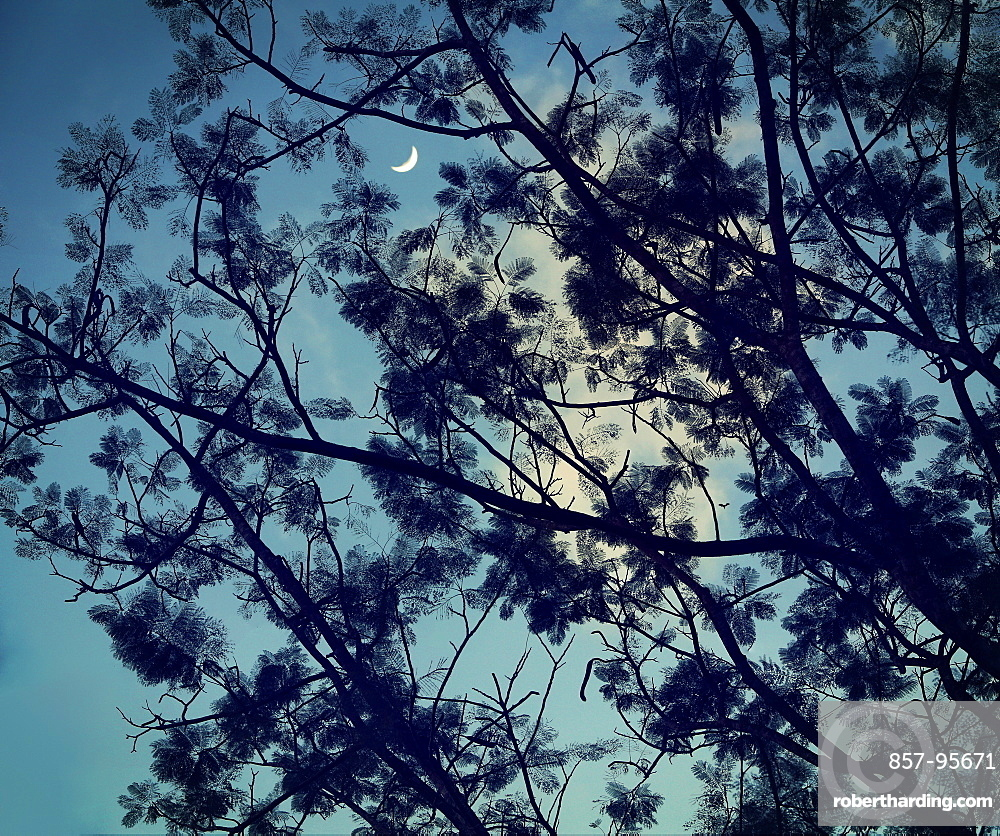 Silhouette of branches of tree against sky at night, Manila, Luzon Island, Philippines
