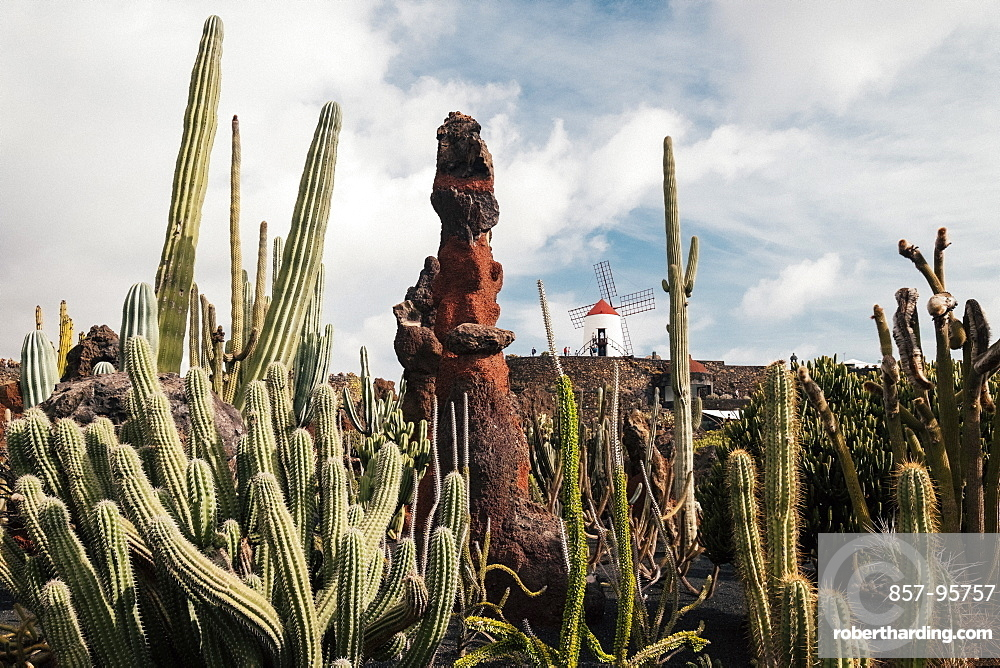 Landscape with Cactus Garden in front of windmill visited by tourists, Lanzarote, Canary Islands, Spain