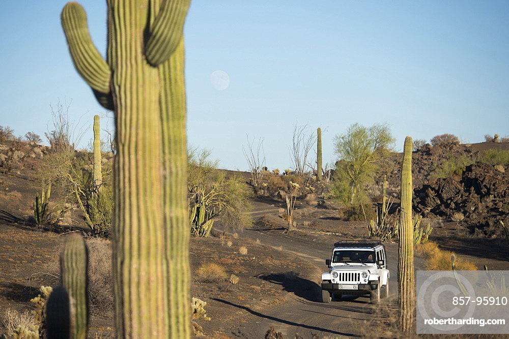 Jeep driving on dusty path amidst cacti in desert, PinacateReserve, Sonora, Mexico