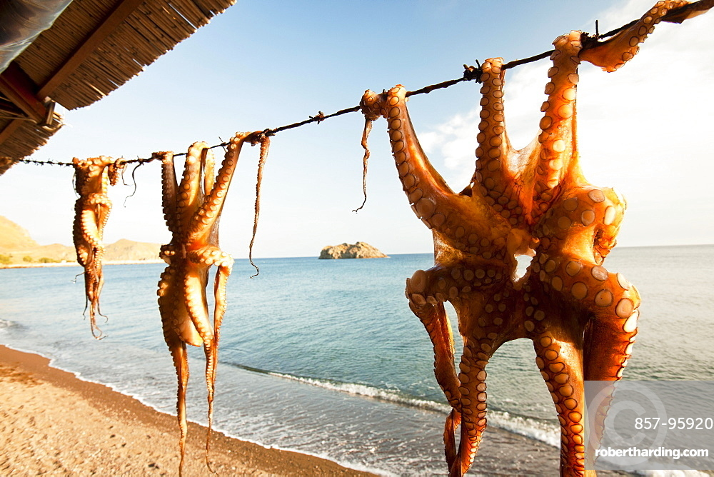 Octopus hung up at a restaurant in Skala Eresou, Lesbos, Greece.