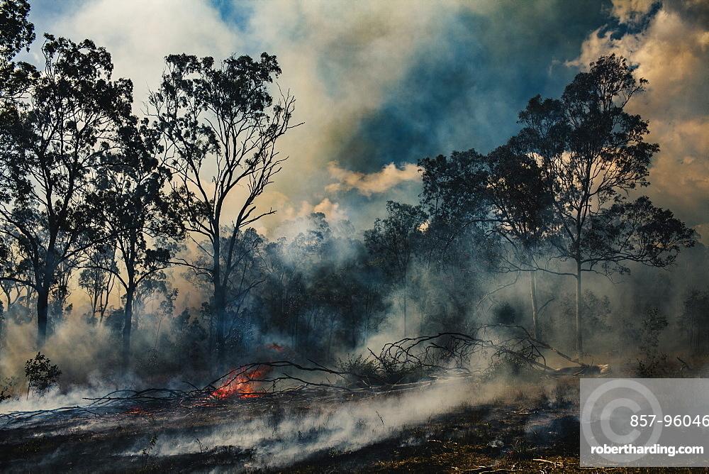 Bush fire near Birnam, Queensland, Australia