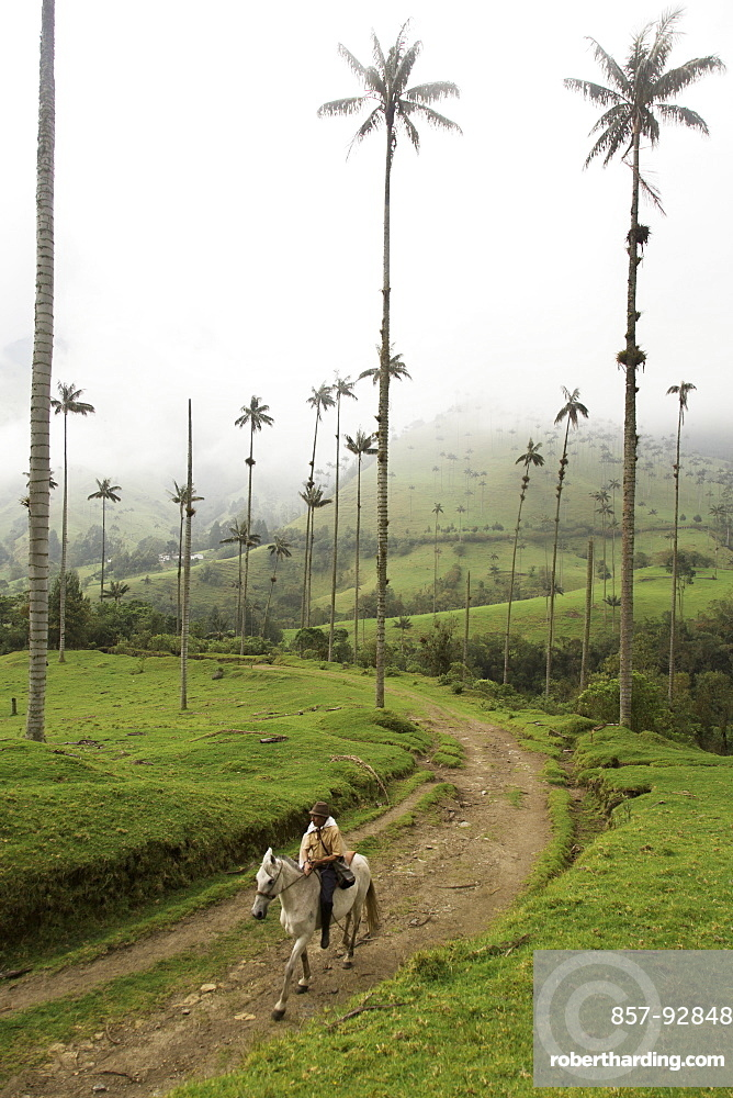 A man rides his horse along a dirt road in the Valle de Cocora, a famous park in Colombia where palm trees tower over green grasses below.