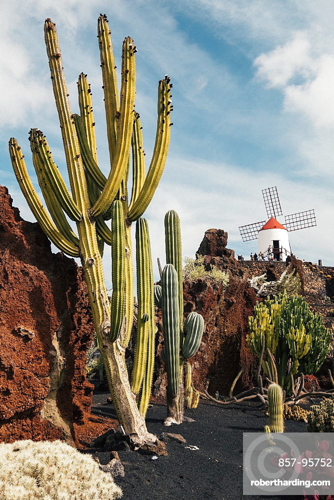 Landscape with Cactus Garden in front of windmill on hill visited by tourists, Lanzarote, Canary Islands, Spain