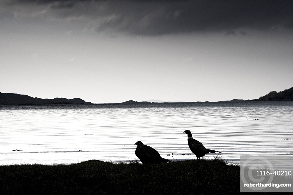 Lake And Birds