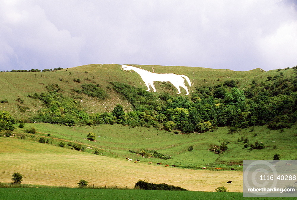 Prehistoric White Horse Carved Into Hillside, Oxfordshire, England