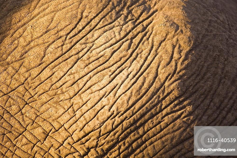 Closeup Of Elephant Skin