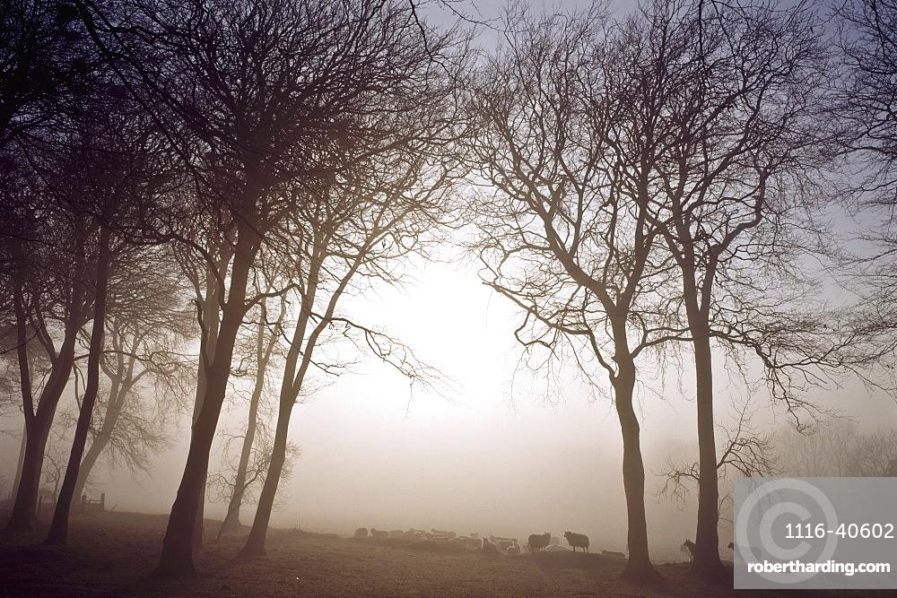 Morning Mist, Co Wicklow, Ireland