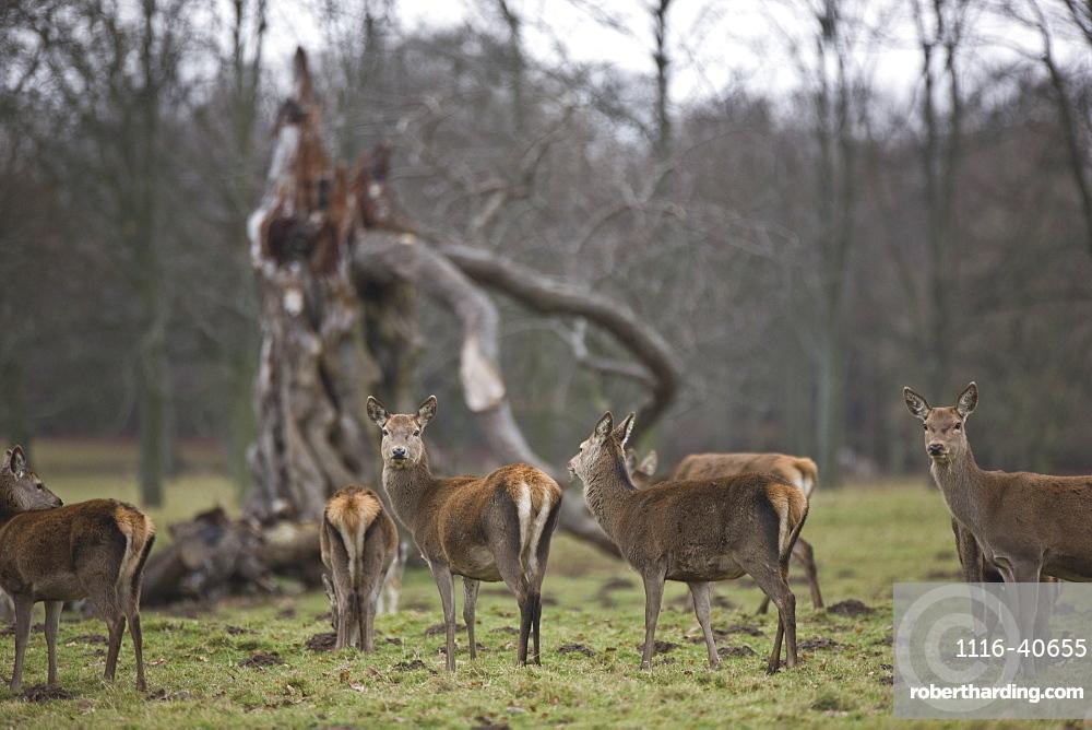 Deer Standing In A Field
