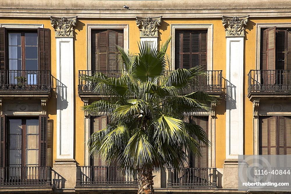 Palm Tree, Placa Reial, Barcelona, Spain