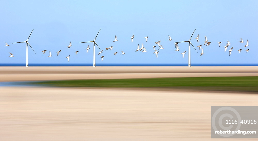 Birds Flying Through Wind Turbines