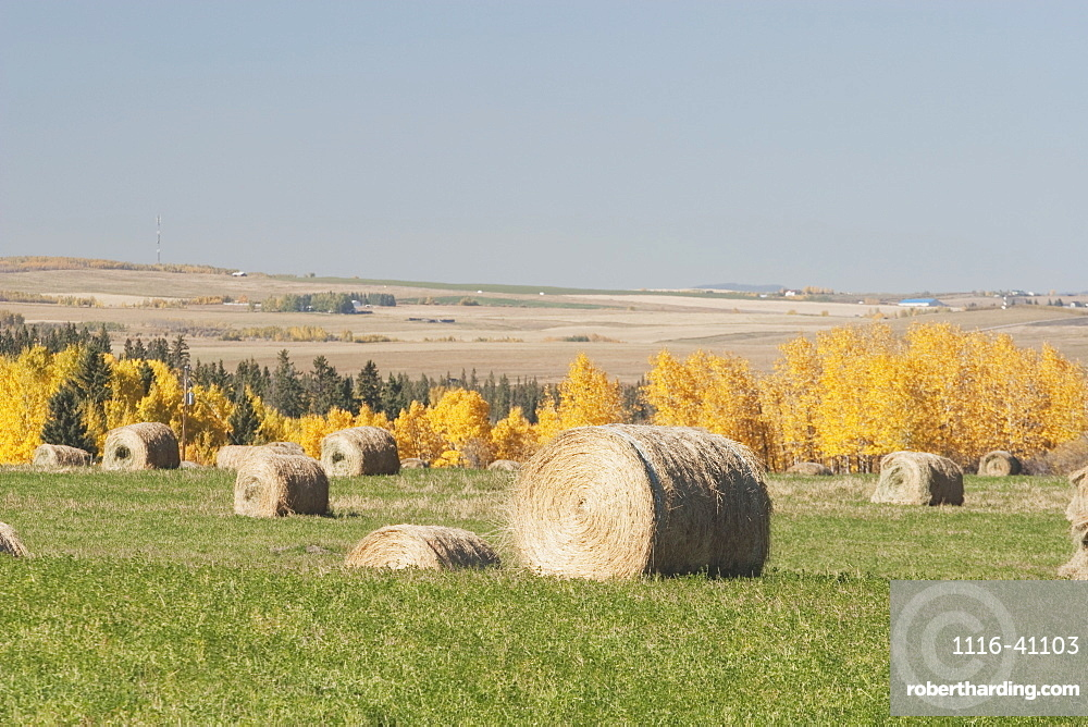Hay Bales And Fall Colours
