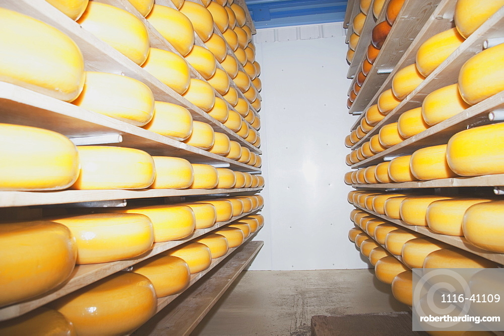 Cheese Factory, Alberta, Canada