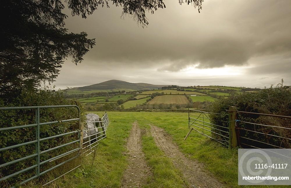 Road Through A Gate To A Field Near Graignemanagh, County Kilkenny, Ireland